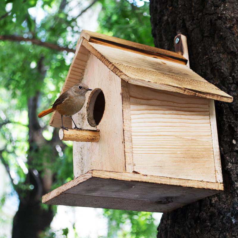 Вълшебна къщичка за птици и катерици- детенце се грижи за приятел