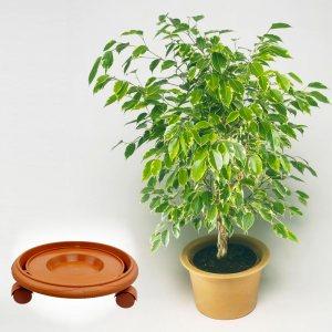 Голяма поставка с 4 подвижни колеца, за саксии с растения, 33 х 13.5 х 7.5 см